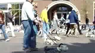 Westie Walk Wayzata