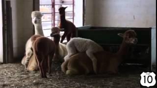 Бесплатно смешные фото животных