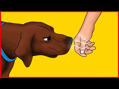 Science Confirms That Dogs Can Recognize Untrustworthy People