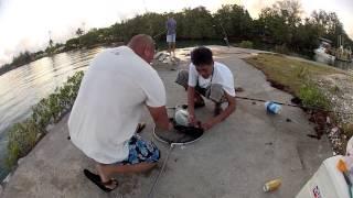 Guam Fishin: Hagatna Boat Basin 2-10-2013