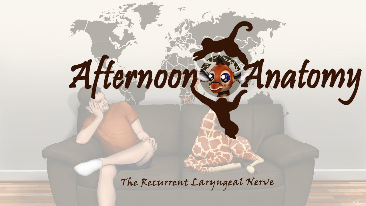 The Recurrent Laryngeal Nerve: Afternoon Anatomy #1 - YouTube
