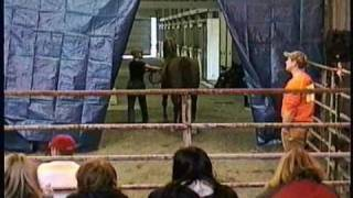 Polish Arabians At Horse Auction, Meadow Wood Farms, Snohomish, WA - 3/20/2011