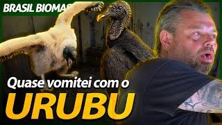 QUASE VOMITEI NO NINHO DO URUBU! | RICHARD RASMUSSEN