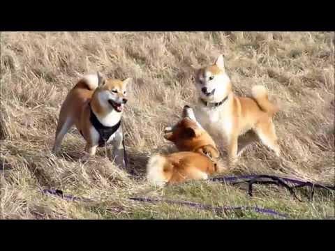 Suki and friends at Cathkin braes Country park Feb 2015