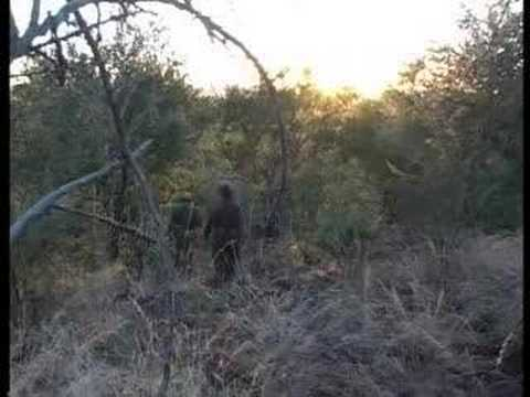 Killing The Poachers - Swaziland