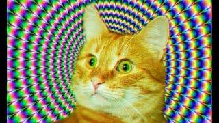 Танцующие коты, видео с котиками!!!#Новинки#Лучшая подборка