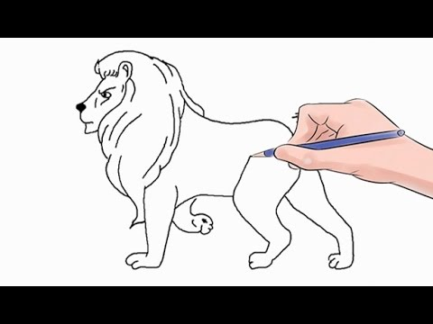 how to draw a lion easy step by step youtube