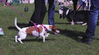 Aid 4 Animals In Distress Spring Dog Show 2018