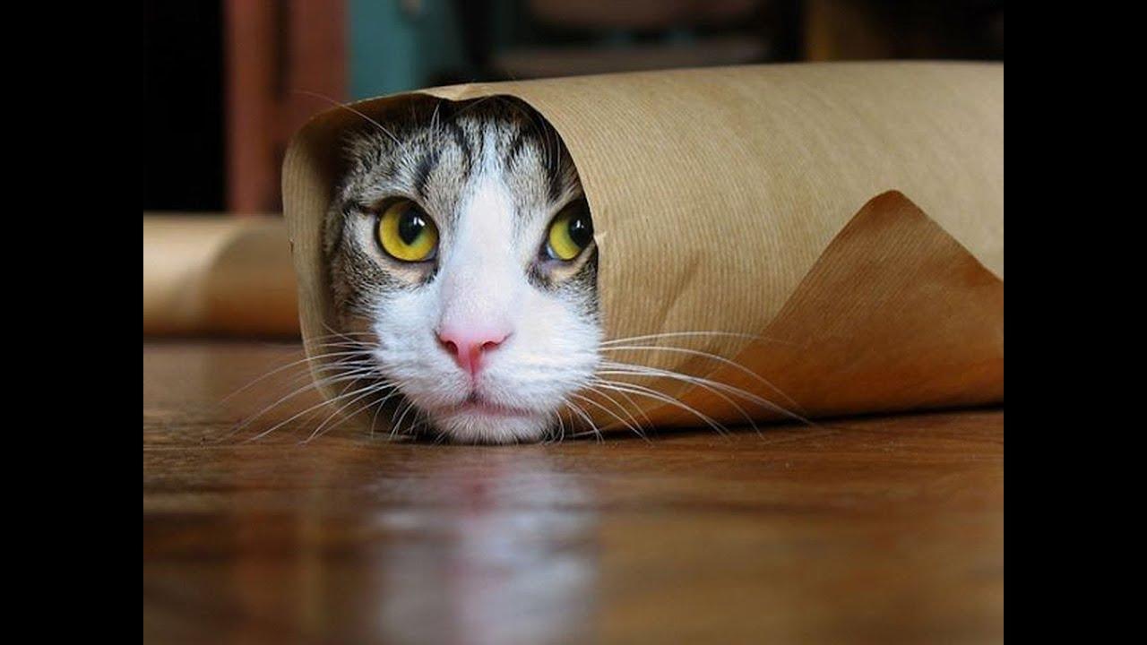 Watch Funny Cat Videos