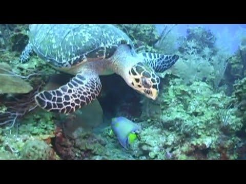 La Vie Marine de Belize