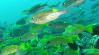 Science O.C.N. -  Deep Water Ocean Lounge - Underwater Cities