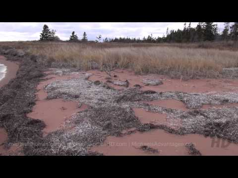 114 Acres Waterfront Land for Sale Prince Edward Island Canada Ives Pt Rd w/FREE HOUSE (pt 2/2 ) PEI