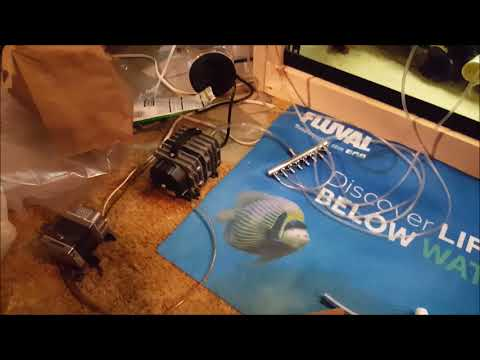 The BEST Air Pump For A Small Fish Room: Elemental Air Pump Review (951 GPH)
