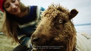 Sheep with Cameras Get Faroe Island Mapped