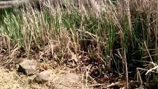 Bertrand Gosselin - Hymne aux oiseaux