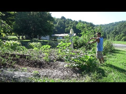 Using Tree Branches As FREE Garden Trellis