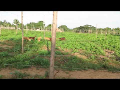 Days at the tobacco farm with Hector Luis Prieto