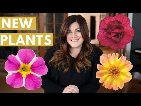 New Plants for 2018 // Garden Answer