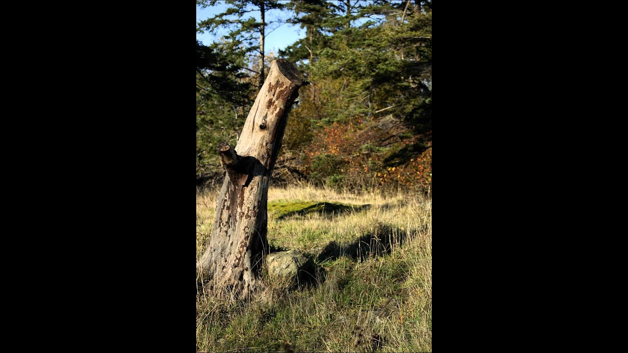 Tall tree stump free photos and art youtube for Tall tree stump ideas