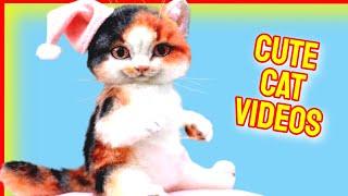 Cute Cat Videos Vol.29  Cat Videos  Cute Cats