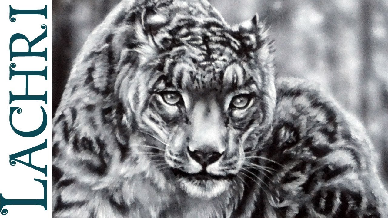 snow leopard face drawing