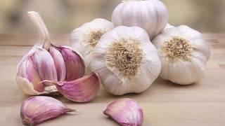 10 Alimentos mortales para Shih Tzu | La Casita de los Shih Tzu
