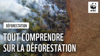 Tout comprendre sur la déforestation