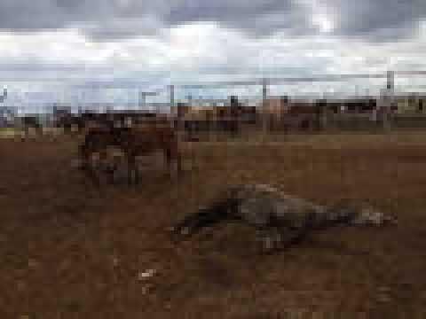 Bakımsızlıktan ölen atlar için çiftlik sahibine 23 bin lira ceza