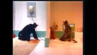 [Os Trapalhões Melhores Momentos] Briga de gato e rato