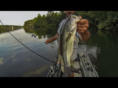 SUMMER BASS FISHING (Texas Rig in the Wood & More!!!)
