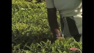 Kenyan tea farmers face troubling times
