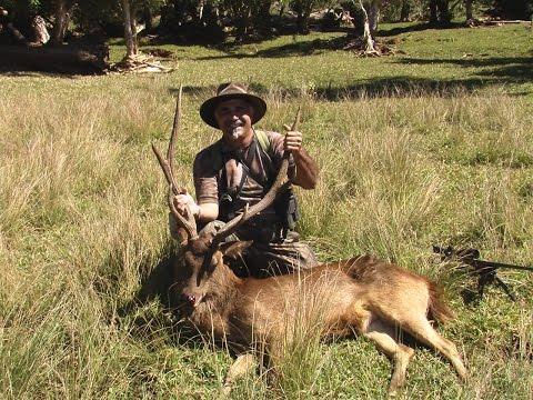 Hunting Rusa deer in New Caledonia part 14(17 meters neck shot)