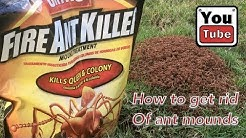 How to get rid of ant mounds