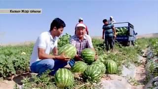 Менин айылым. Жалал Абад облусу Кызыл Жар айылы.