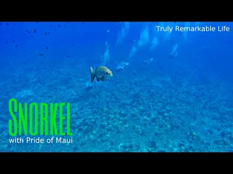 Snorkeling MOLOKINI CRATER and Turtle Town with the Pride of Maui  |  Truly Remarkable Life