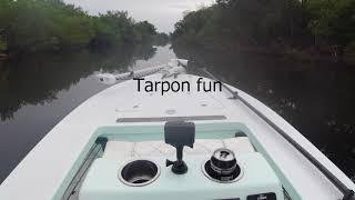 Tarpon Fun