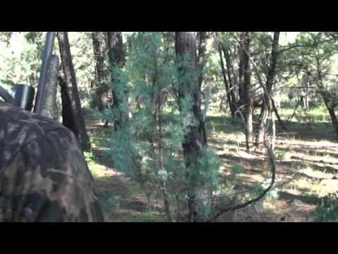 White Mountain Elk Hunt 2013