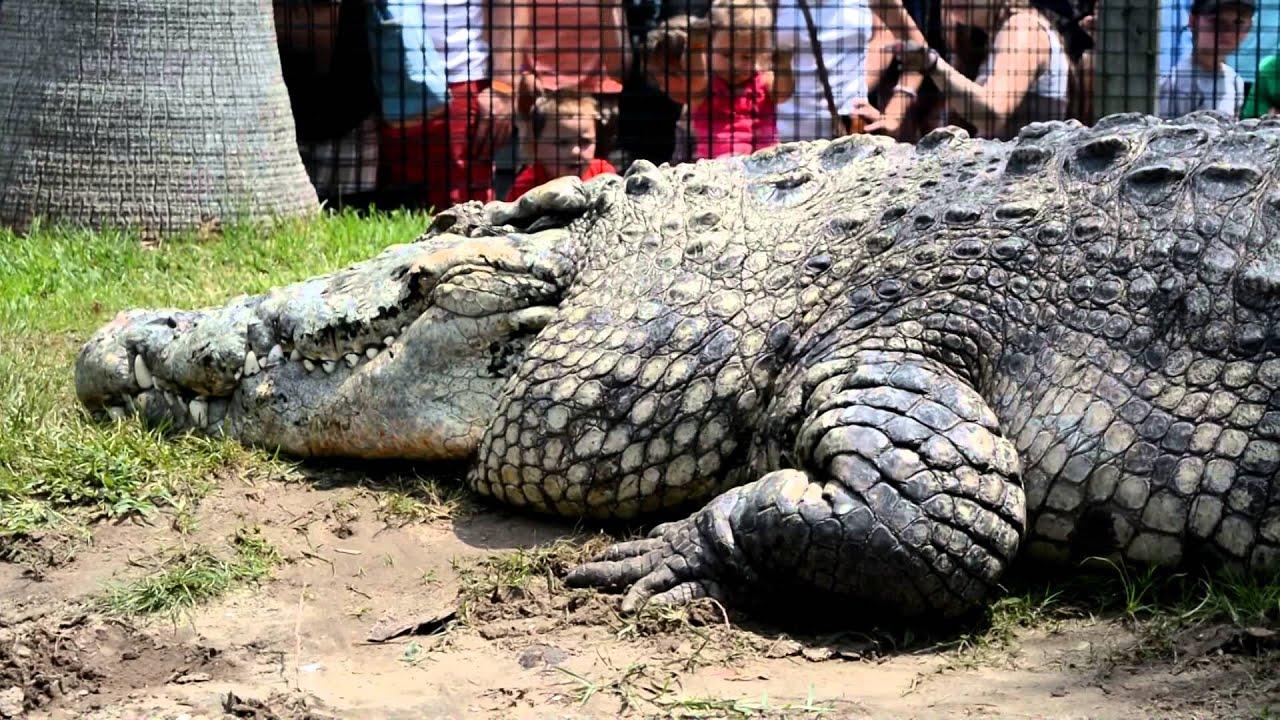 Alligator Adventure Myrtlebeach Com Youtube