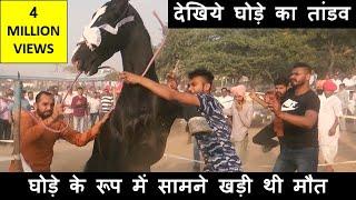 पुष्कर मेले में घोड़ा हुआ बेकाबू : कैसे किया काबू में ?  Controlling Indian Horses In Pushkar Fair