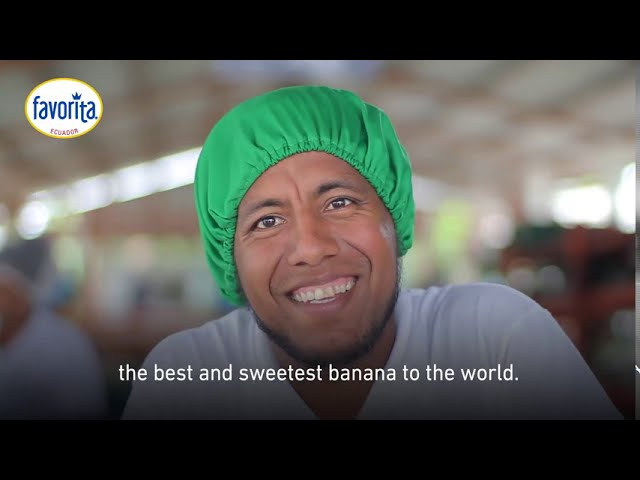 Favorita, bananas with responsible taste. - Reybanpac
