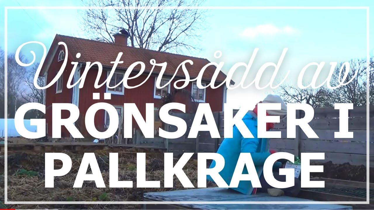 Trädgårdsdesign  20 smarta genvägar för din trädgård 2016 09 13