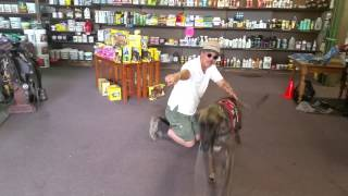 Amadeo, The Training Of A Service Dog.