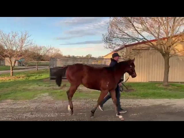Exceed And Excel X Duhallow Colt