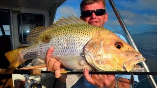 Jigging for Fingermark!!  or Golden snapper!! Thumbnail