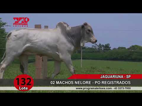 LOTE 132