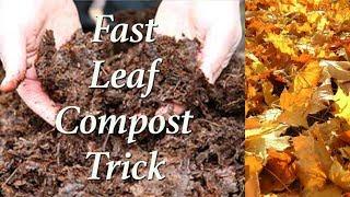 Super Fast Leaf Composting Trick