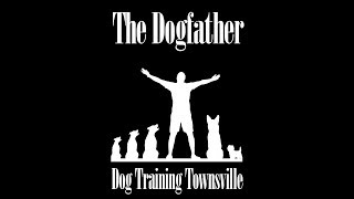 """Saving the Underdogs"" with The Dogfather Townsville!"