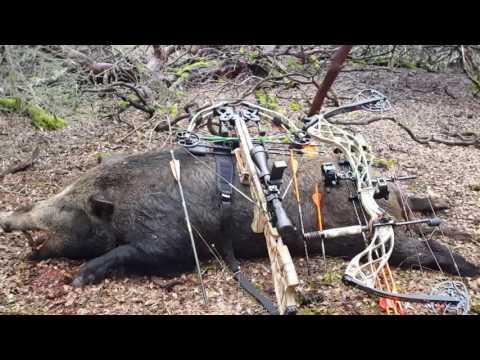 2016 Lake Sonoma Opening Pig Hunt