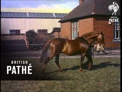 Stallion Show (1955)