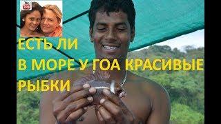 Есть ли в море у Гоа красивые рыбки
